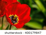 red tulip on blurred background of green garden bokeh - stock photo