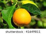 Orange and Lemon. - stock photo