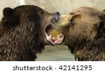 Kissing Alaskan Brown Bears - stock photo