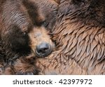 Brown bear hug - stock photo