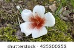 White flower fallen on the ground - stock photo