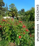 Red roses on the flowerbed in the park, palm, green shrubs and trees, blue sky - stock photo