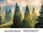 morning fog in conifer forest in warm sun light - stock photo