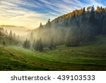 spruce trees in fog on hill side meadow under the blue sky before sunrise - stock photo