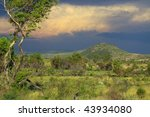 Building storm over the African savanna - stock photo