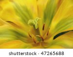 the heart of a beautiful flower - stock photo