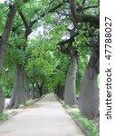 Avenue with chorisia trees - stock photo