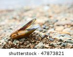 Freshly cooked New Zealand green-lipped mussel - stock photo