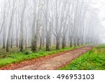 park trees and foliage in autumn morning fog - stock photo