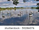 Swan lake on blue sky - stock photo