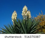 Blooming yucca against blue sky - stock photo