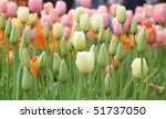 field of colorful tulips - stock photo