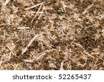 close up shot of anthill - stock photo