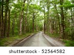 Dirt road through rainforest at New Zealand - stock photo