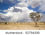 A stunning Kalahari scene with a cloudy storm in the background and large tree in the foreground - stock photo