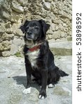 Canis Familiaris - stock photo