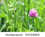one clover in the grass - stock photo