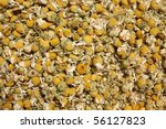 Dried flowers of chamomile - stock photo