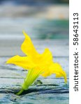 Yellow flower growing from the wood - stock photo