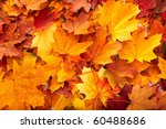 Background group autumn orange leaves. Outdoor. - stock photo