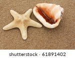 Shell and starfish on the sand - stock photo