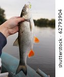 Chub caught on a green hardbait against river landscape - stock photo