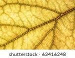 leaf texture grunge style /texture organic background - stock photo