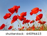 beautiful red poppies on clear sky - stock photo