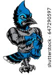 Mascot Blue Jay, strutting, proud and tough, which gives tribute to traditional school mascots but with a new look and attitude. Suitable for all sports. - stock vector