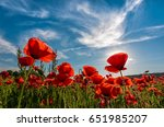 poppy flowers field under the blue sky with clouds. beautiful summer landscape at sunset - stock photo