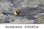 Green turtle (Chelonia mydas) near Kona (Big Island, Hawaii) 01 - stock photo