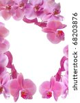 Pink orchid with drop of dew on white background, valentine concept - stock photo