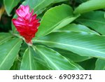 Red tropical flower against green leaves - stock photo