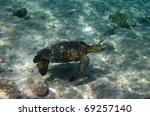 Meet the Green turtle (Chelonia mydas) near Kona (Big Island, Hawaii) during a snorkel trip 03 - stock photo