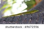 Day Gecko (Phelsuma lizard) 02 - stock photo
