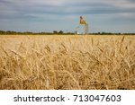 Field of Golden Wheat With Grain Elevator in Distance - stock photo