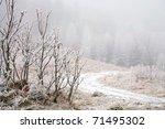 Trees in misty haze in a gloomy winter day. Pasterka village in Poland. - stock photo