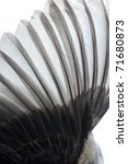 bird wing feather texture background - stock photo