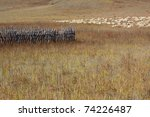 Group of sheep in Bashang grassland, Hebei, China - stock photo