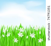 Green grass with white flowers. Spring Greeting Card - stock vector