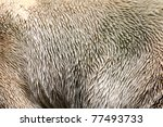 Polar bear fur - stock photo