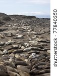 sea lions on california coast north of santa monica may 2011 - stock photo