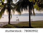 Palm tress at beach - stock photo