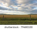 Wheat field in grassland of Hulun Buir League of Inner-Mongolia, China - stock photo