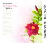 Fresh dipladenia flower background - stock photo