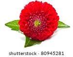 dahlia red isolated on white background - stock photo