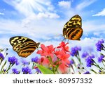 two beautiful butterflies,Common Tiger Glassywing, on a flower field - stock photo