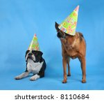 two dogs posing with birthday hats on - stock photo