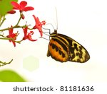 beautiful butterfly,Common Tiger Glassywing, on white background - stock photo
