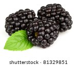 Blackberry with leaves of mint - stock photo